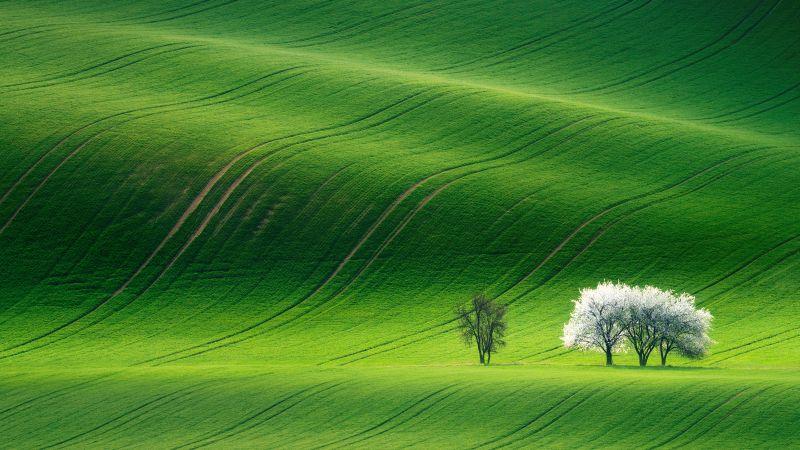 Grassland, Green, Landscape, Summer, Stock, Aesthetic, Wallpaper