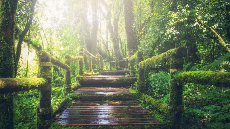 Rainforest, Wooden bridge, Daylight, Footpath, Green, Forest, 5K, Wallpaper