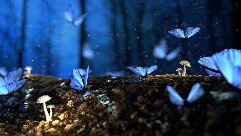 Butterflies, Mushroom plants, Macro, Forest, Bokeh, Wallpaper