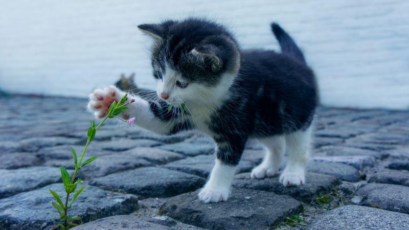 Kitten, Adorable, Kitty, Pet, Cute Cat, 5K, Wallpaper