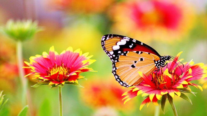 Butterfly, Pollen, Flower garden, Bokeh, Bloom, Blossom, 5K, Wallpaper