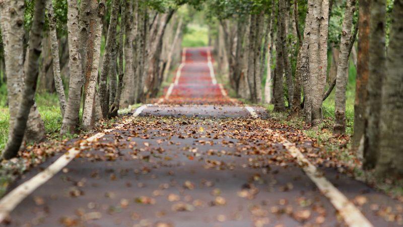Fall, Trees, Road, Tarmac, Woods, Foliage, 5K, Wallpaper