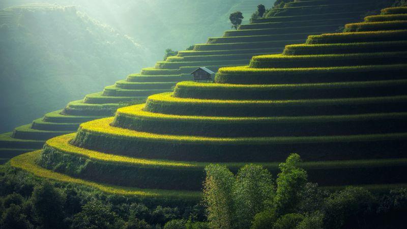 Rice fields, Agriculture, Paddy fields, Landscape, Terrace farming, Green, Daylight, 5K, 8K, Wallpaper