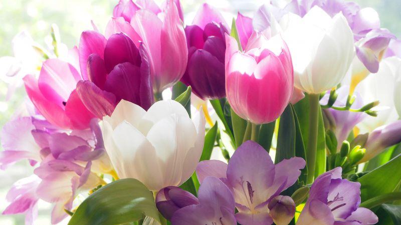 Tulips, Crocus flowers, Colorful, Bouquet, 5K, Wallpaper