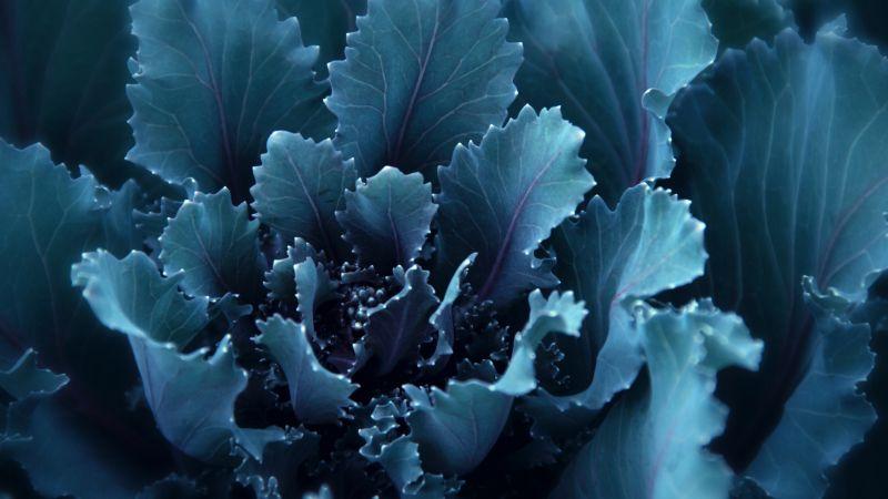 Blue flower, Bloom, Petals, Wallpaper