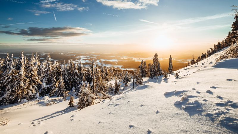 Winter, Landscape, Pine trees, Frosted trees, Sunny day, Snow, 5K, Wallpaper