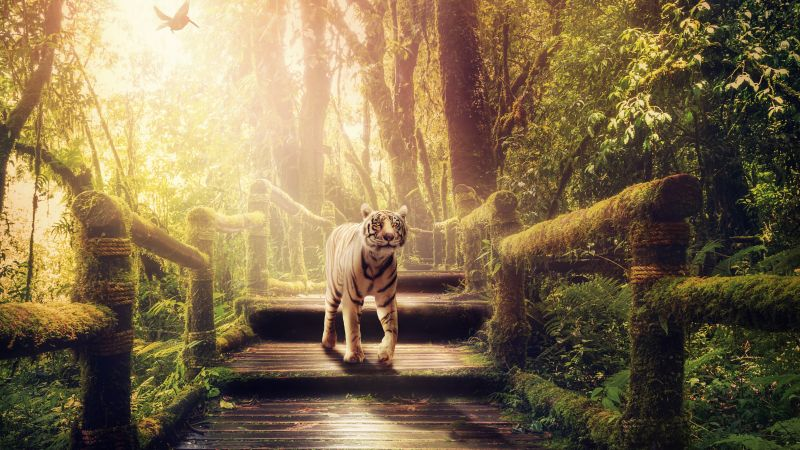 White tiger, Wooden stairs, Forest, Jungle, Green Trees, Sunlight, Wooden Planks, 5K, Wallpaper