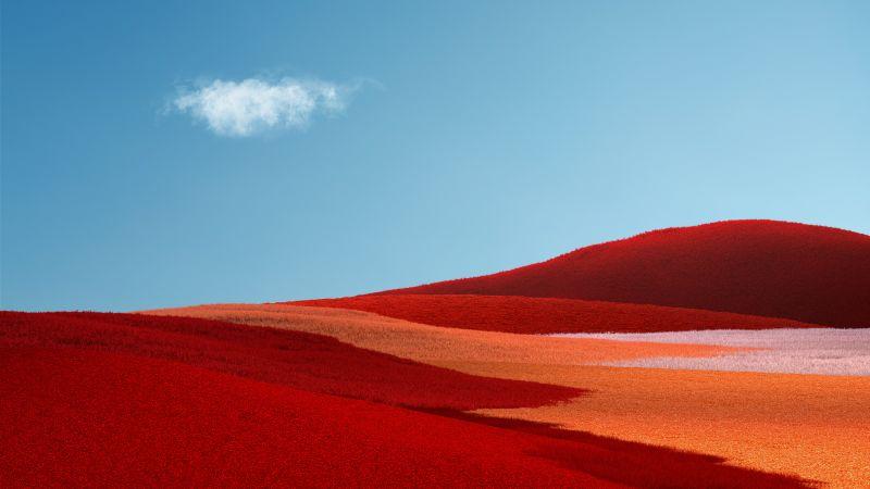 Landscape, Grass field, Red Grass, Clear sky, Blue Sky, Microsoft Surface Pro X, Stock, Wallpaper