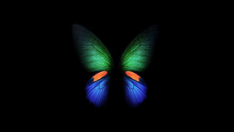 Butterfly, Samsung Galaxy Fold, Black background, Stock, Wallpaper