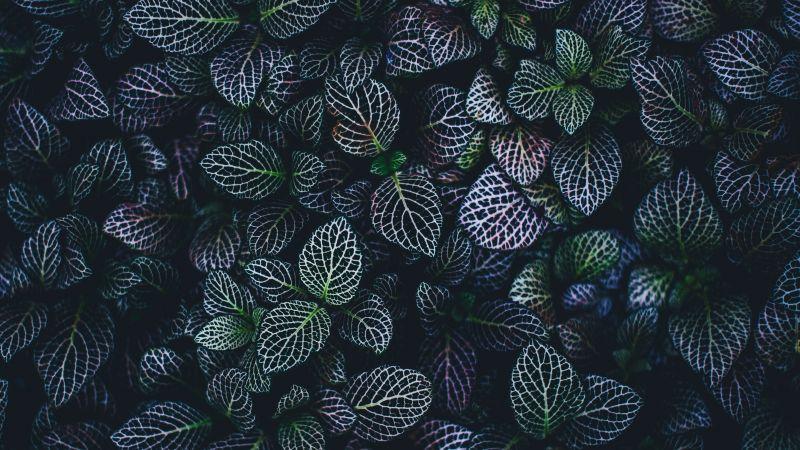 Leaves, Plant, Botanical garden, Pattern, Wallpaper