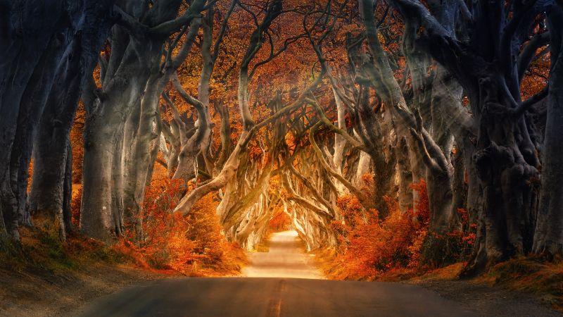 Forest, Road, Daylight, Aesthetic, Autumn, Fall, Sunrays, Trees, 5K