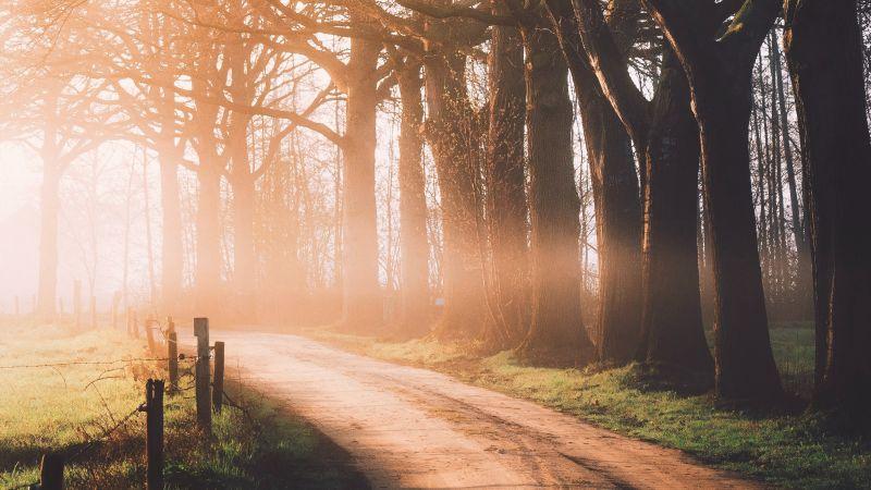 Autumn, Dirt road, Sunlight, Morning, Foggy, Forest, Path, Wallpaper