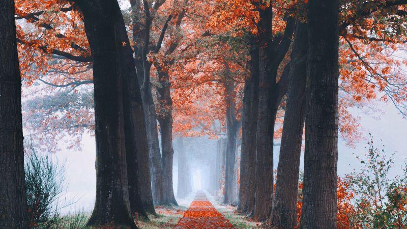 Autumn, Trees, Path, Foggy, Morning, Foliage, Fallen Leaves, 5K, Wallpaper