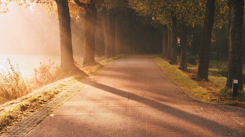 Autumn, Sunlight, Sun rays, Foggy, Morning, Road, Sunrise, Trees, Wallpaper