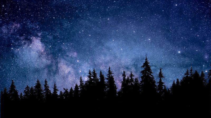 Night, Starry sky, Forest, Silhouette, Astronomy, Cosmos, 5K, Wallpaper