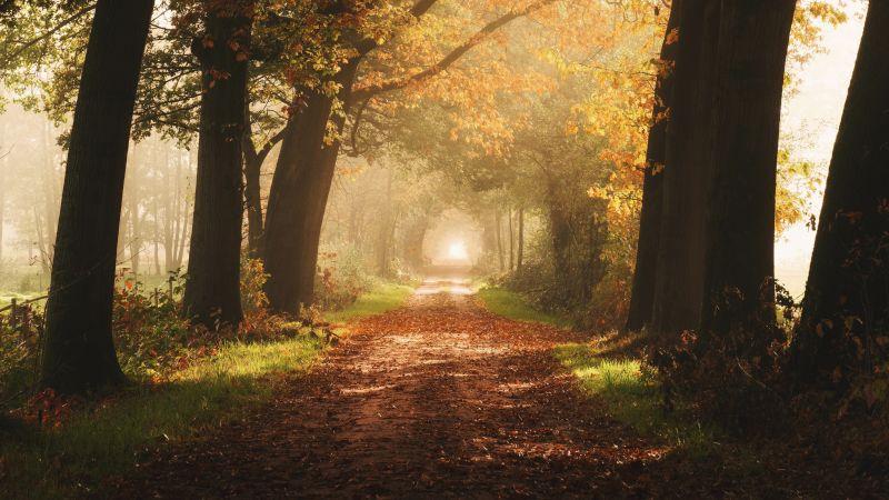 Autumn, Forest, Foggy, Yellow, Sunlight, Path, Dirt road, Wallpaper