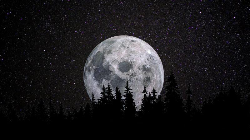 Full moon, Forest, Night, Dark, Starry sky, 5K, 8K, Wallpaper