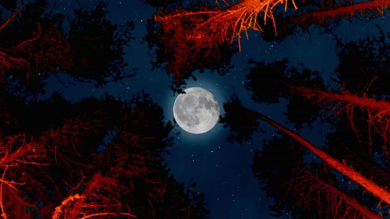 Full moon, Trees, Sky view, Night, Campfire, Outdoor, Woods, Dark, Wallpaper