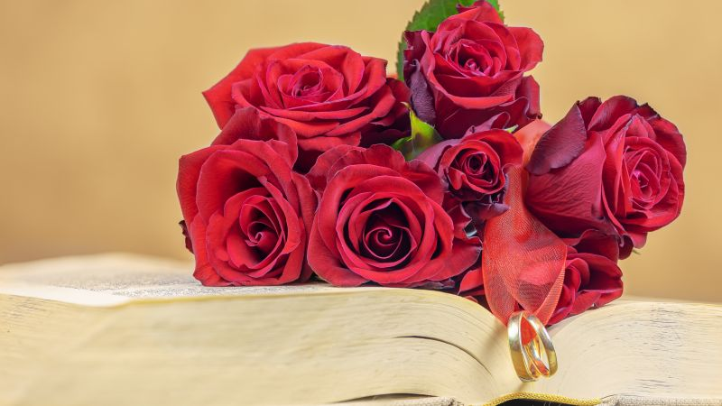 Red Roses, Wedding rings, Book, Valentine's Day, 5K, Wallpaper