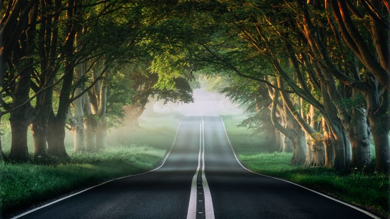 Forest, Road, Mist, Avenue Trees, Plants, Green, Spring, Foggy, Wallpaper