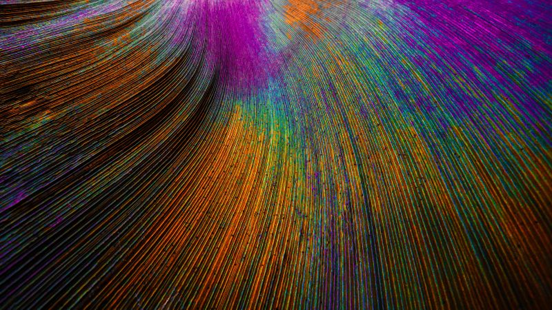Peacock feather, Curved lines, Colorful, Particles, Wallpaper