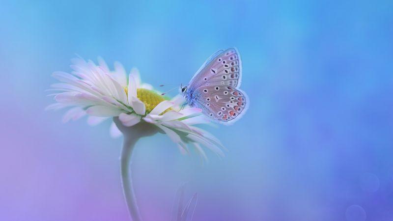 Butterfly, Gradient background, White flower, Wallpaper