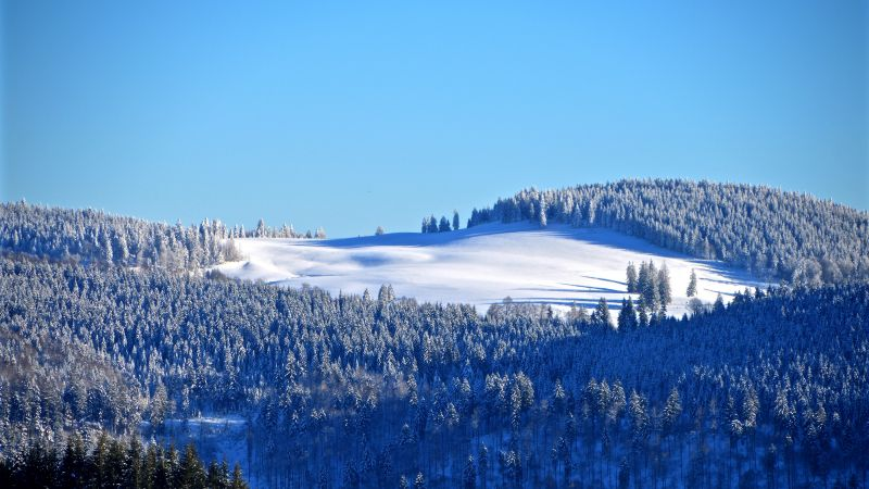 Winter forest, Snow, Trees, Hill, Sky view, Clear sky, Blue Sky, Wallpaper
