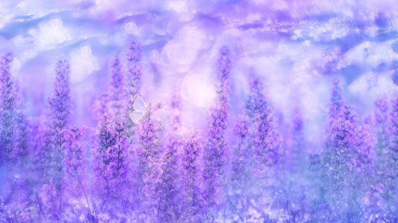 Sage Plant, Violet flowers, Butterfly, Garden, Purple, Wallpaper