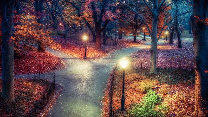 Central Park, New York City, Autumn leaves, Path, Night, Lights, Beautiful, 5K, Wallpaper