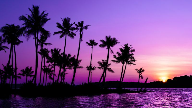 Purple Sunrise, Clear sky, Palm trees, Scenery, Backwaters, Sky view, 5K, Wallpaper