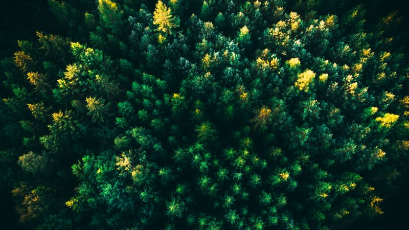 Green Trees, Forest, Aerial view, Greenery, Drone photo, Wallpaper