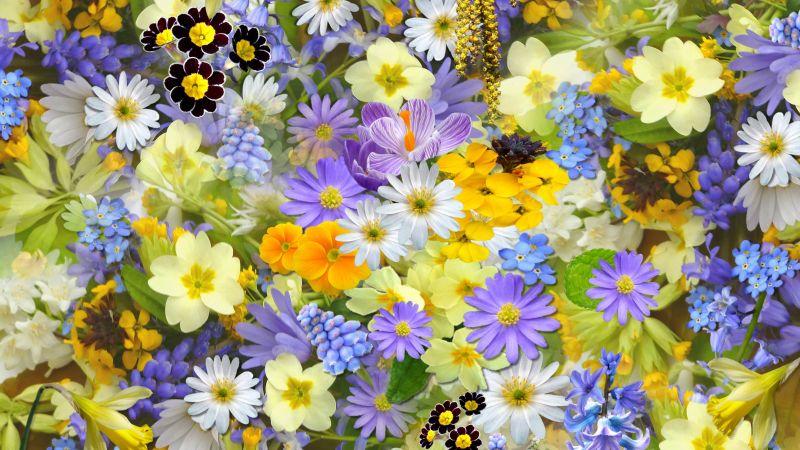 Colorful flowers, Vivid, Yellow flowers, Blossom, Bloom, Wallpaper