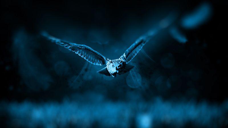 Owl, Dark background, Moonlight, Blue, Forest, Bokeh, Flying, 5K, Wallpaper