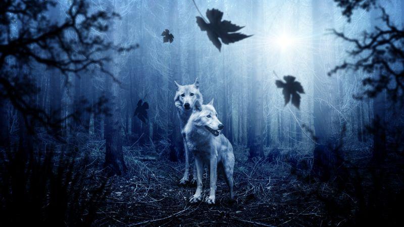 Wolf, Forest, Dark background, Predator, Wild animals, Tree Trunks, Sun light, Wallpaper