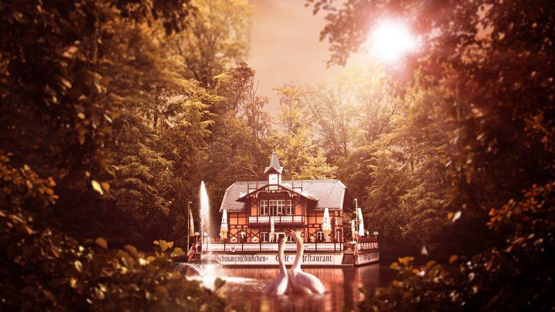 White Swan, House, Forest, Trees, Sun light, Lake, 5K, Wallpaper