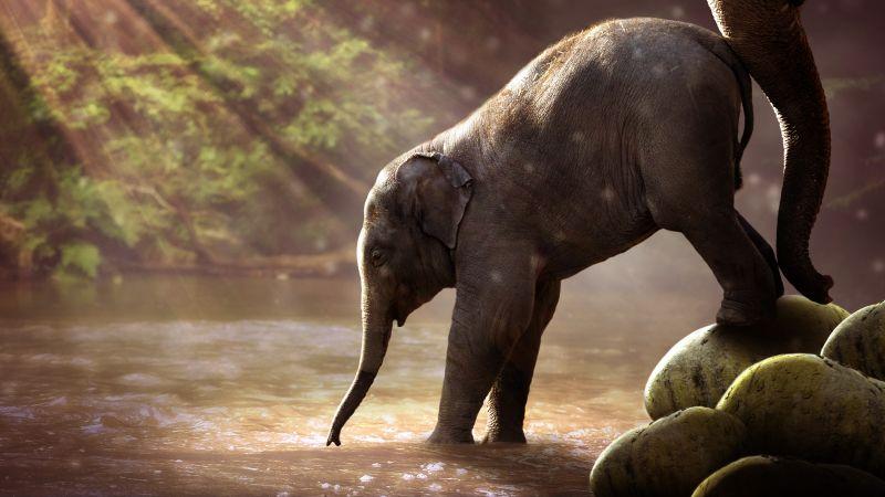 Elephant cub, Rocks, River, Sun rays, Waterhole, Daytime, Mammal, Cute, 5K, 8K, Wallpaper