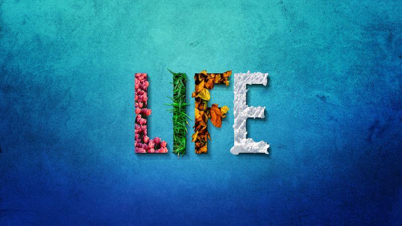 Life, Seasons, Spring, Summer, Autumn, Winter, Blue background, Flowers, Leaves, Snow, Grass, 5K, Wallpaper