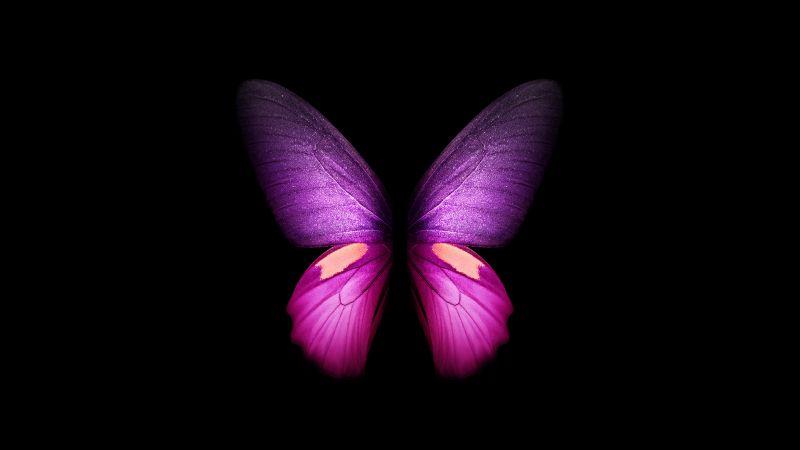 Purple Butterfly, Wings, Black background, Samsung Galaxy Fold, AMOLED, CGI, Girly, Stock, Wallpaper