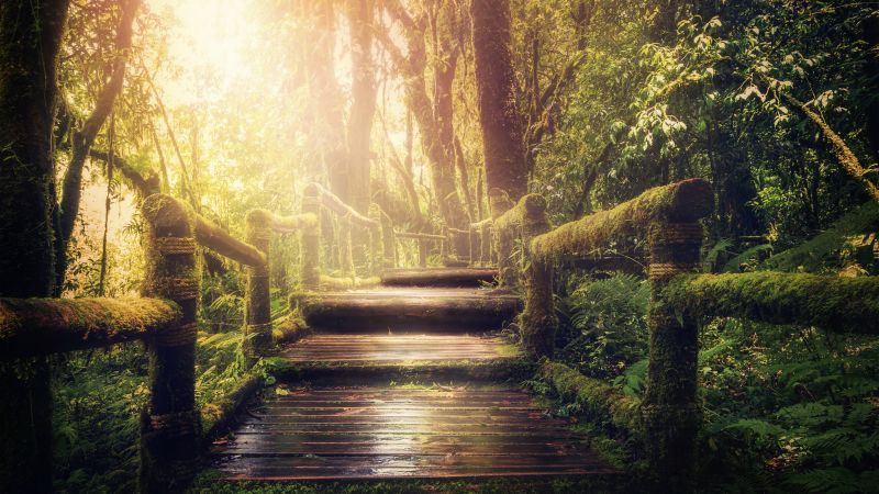 Wooden stairs, Forest, Jungle, Green Trees, Sunlight, Wooden Planks, 5K, Wallpaper