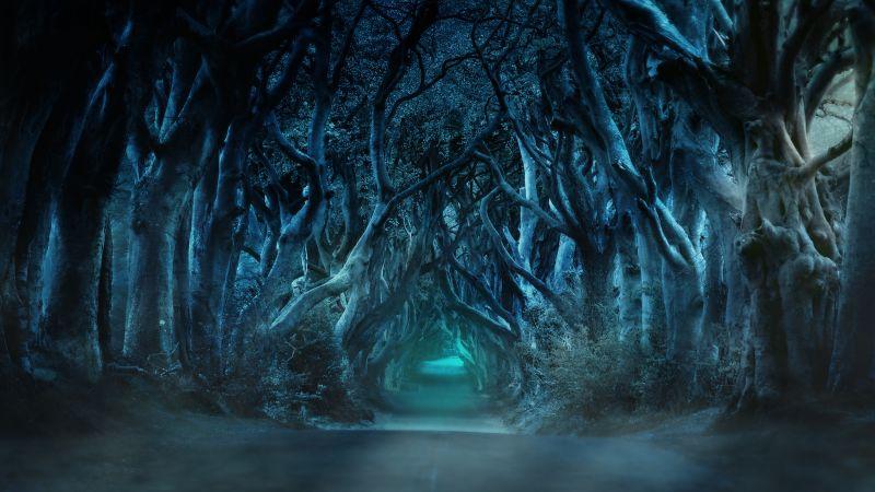 Avenue, Trees, Moonlight, Blue, Woods, Forest path, Road, Landscape, Wallpaper