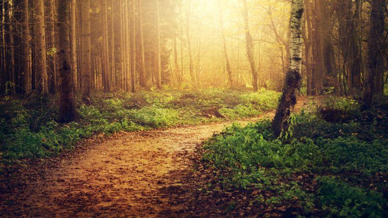 Forest path, Sunlight, Trees, Woods, Autumn, 5K, Wallpaper