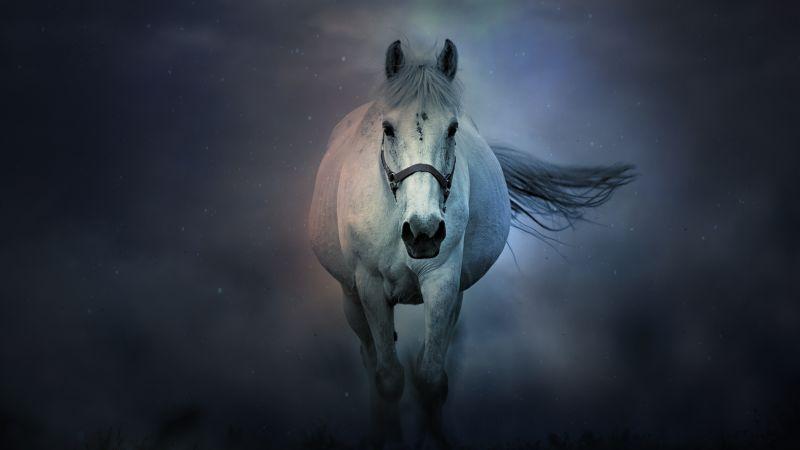 White horse, Running Horse, Dark background, 5K, 8K, Wallpaper
