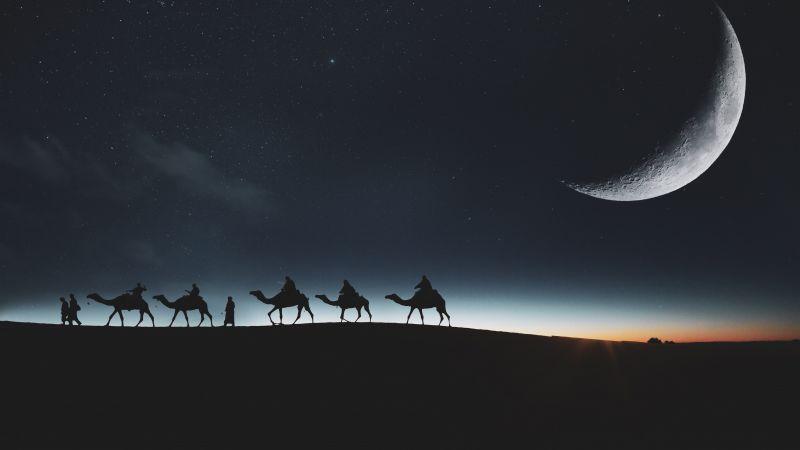 Camels, Silhouette, Moon, Dark background, Night sky, Stars, 5K, 8K, Wallpaper