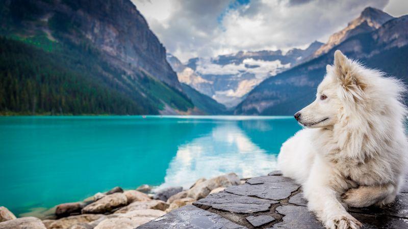 White Dog, Mountains, Lake Louise, Clouds, Pet, Water, Blue, 5K, Wallpaper