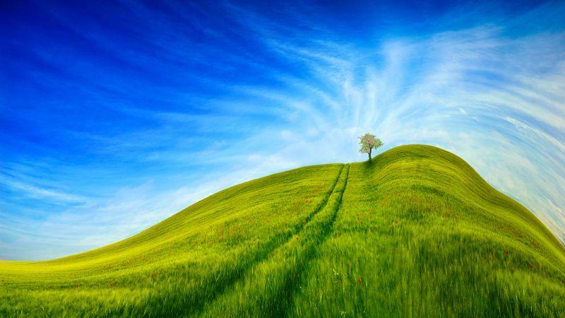 Grass Landscape, Blue Sky, Tree, Clear sky, Beautiful, Scenery, Daytime, 5K, 8K, Wallpaper