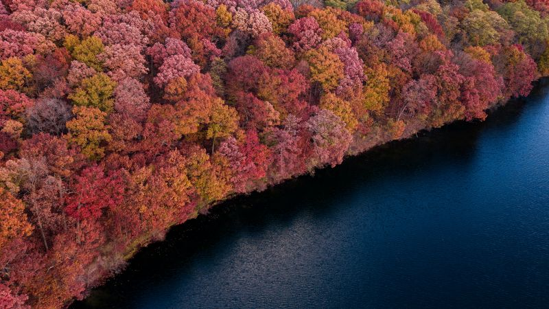 Colorful forest, Trees, Red, Yellow, Aerial view, Lake, River, Body of Water, Scenic, Wallpaper