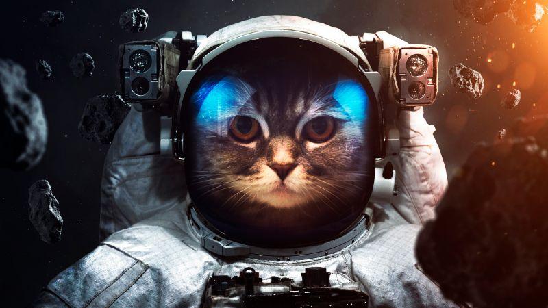 Space suit, Cat, Asteroids, Astronaut, Stars, Wallpaper