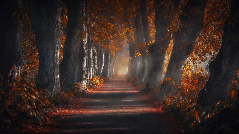 Pathway, Forest, Autumn leaves, Trees, Woods, Sun rays, Trunk, Wallpaper