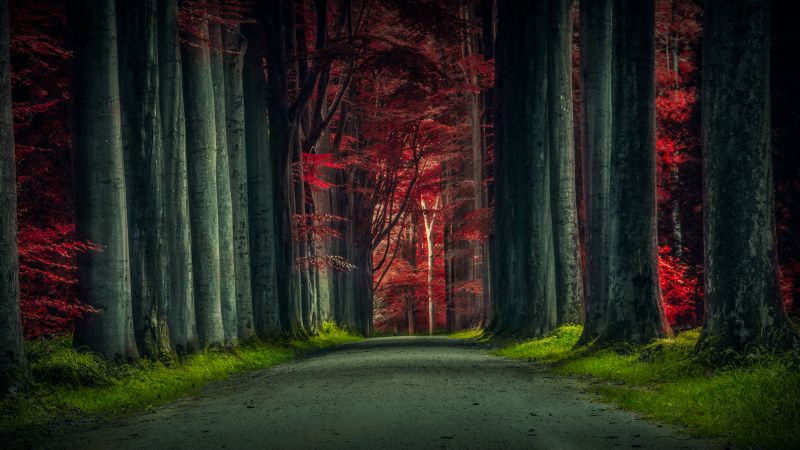 Forest Road, Trees, Woods, Sunset, Autumn Forest, Dawn, Pathway, Scenic, 5K, Wallpaper
