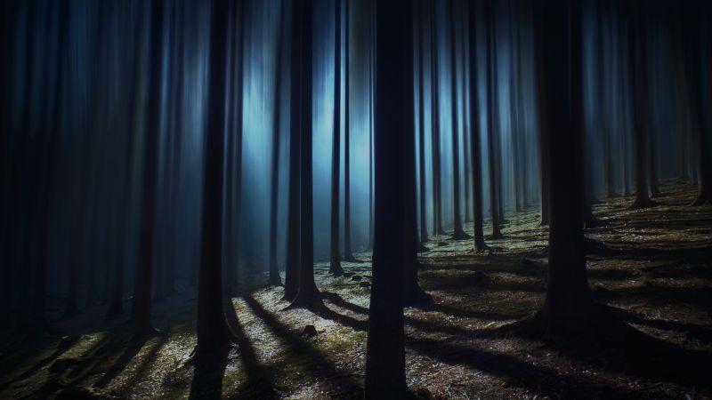 Dark Forest, Woods, Night time, Dark, Shadow, Tall Trees, Haunted, Mystery, 5K, Wallpaper